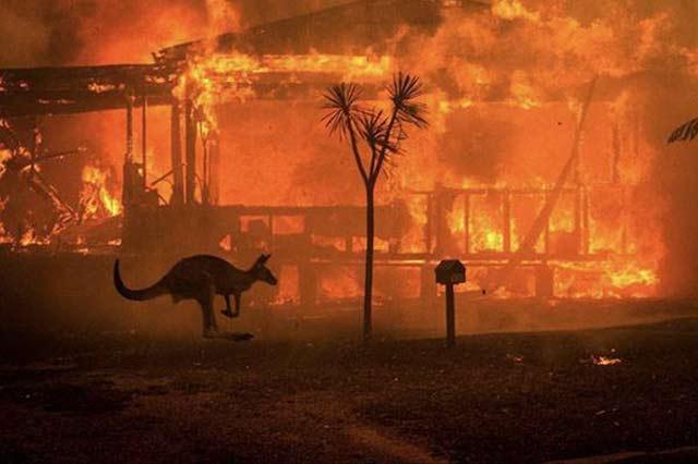 澳洲野火,導致近五億動物葬生火海